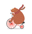 bear on bicycle vector image vector image