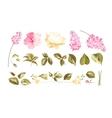 elements flower bouquets vector image