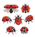 insect ladybird set cute small red bugs vector image vector image