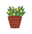 plant with green leaves and yellow flowers in vector image vector image