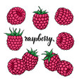 set beautiful cartoon pink raspberry vector image vector image