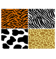 Tiger zebra cow and giraffe print vector image vector image