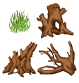 Bizarre tree roots and tuft of grass four items vector image