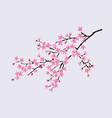 branch blooming sakura with flowers cherry vector image vector image