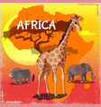 cartoon wild african animals concept vector image vector image