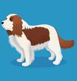 cavalier king charles spaniel dog vector image vector image