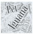 Iguana pets Word Cloud Concept vector image vector image