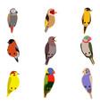 little birds set amadin bullfinch canary vector image vector image