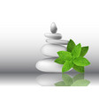 mint herb leaves with white stones vector image vector image