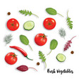 fresh vegetables herbs and spices isolated on vector image
