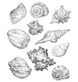hand drawing seashells set 2
