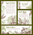 organic spices and herbs seasonings sketch vector image vector image