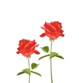 Roses on a white background with space for text vector image