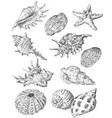 hand drawing seashells set 3 vector image