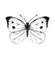 hand drawn small white butterfly vector image vector image
