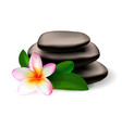 plumeria flower leaves and spa massage stone vector image