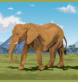colorful scene african landscape with elephant vector image