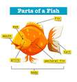 Diagram with parts of fish vector image vector image