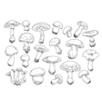 Freehand drawing mushrooms items vector image