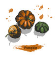 pumkin sketch coloured ink hand drawn vector image