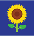 sunflower icon isolated on blue background vector image