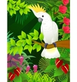 Cockatoo vector | Price: 3 Credits (USD $3)