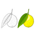 lemon hand drawn colored and outline sketch vector image vector image