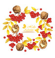 autumn wreath walnuts and mountain ash vector image