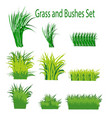 grass and bushes outdoor landscape elements vector image vector image