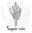 hand drawn saguaro cactus vector image