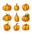 pumpkin thanksgiving and halloween icons vector image vector image