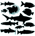 silhouette of fish vector image vector image