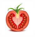 a slice tomato vector image
