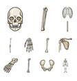 bone and skeleton icon set vector image