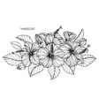 hibiscus flower drawing vector image