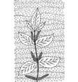 nettle - flower black and white ink vector image vector image