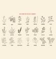 best medicinal herbs for scalp-dandruff vector image vector image