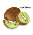 kiwi fruits realistic detailed 3d vector image vector image
