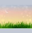 leaves grass and stars in sunrise sky vector image