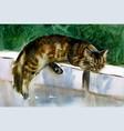 sleeping cat vector image vector image
