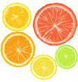 Realistic citrics set of fruit slices vector image