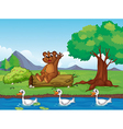 A smiling bear and ducks vector image vector image