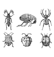 big set of insects bugs beetles and bees many vector image vector image