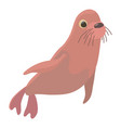 fur seal icon cartoon style vector image