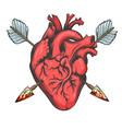 heart pierced two arrows vector image vector image
