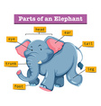Diagram showing parts of elephant vector image