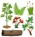 different types of plants vector image vector image
