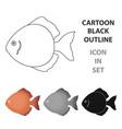 discus fish icon cartoon singe aquarium fish icon vector image