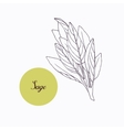 Hand drawn sage branch with leaves isolated on vector image vector image