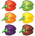 peppers multicolor vector image vector image